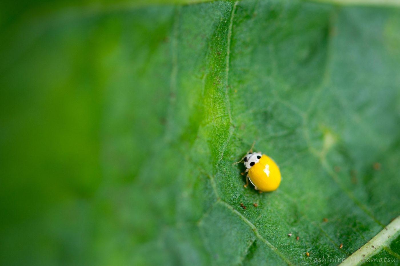 てんとう 虫 の お告げ てんとう虫のスピリチュアル意味!幸運のシンボル?恋愛・種類・色な...