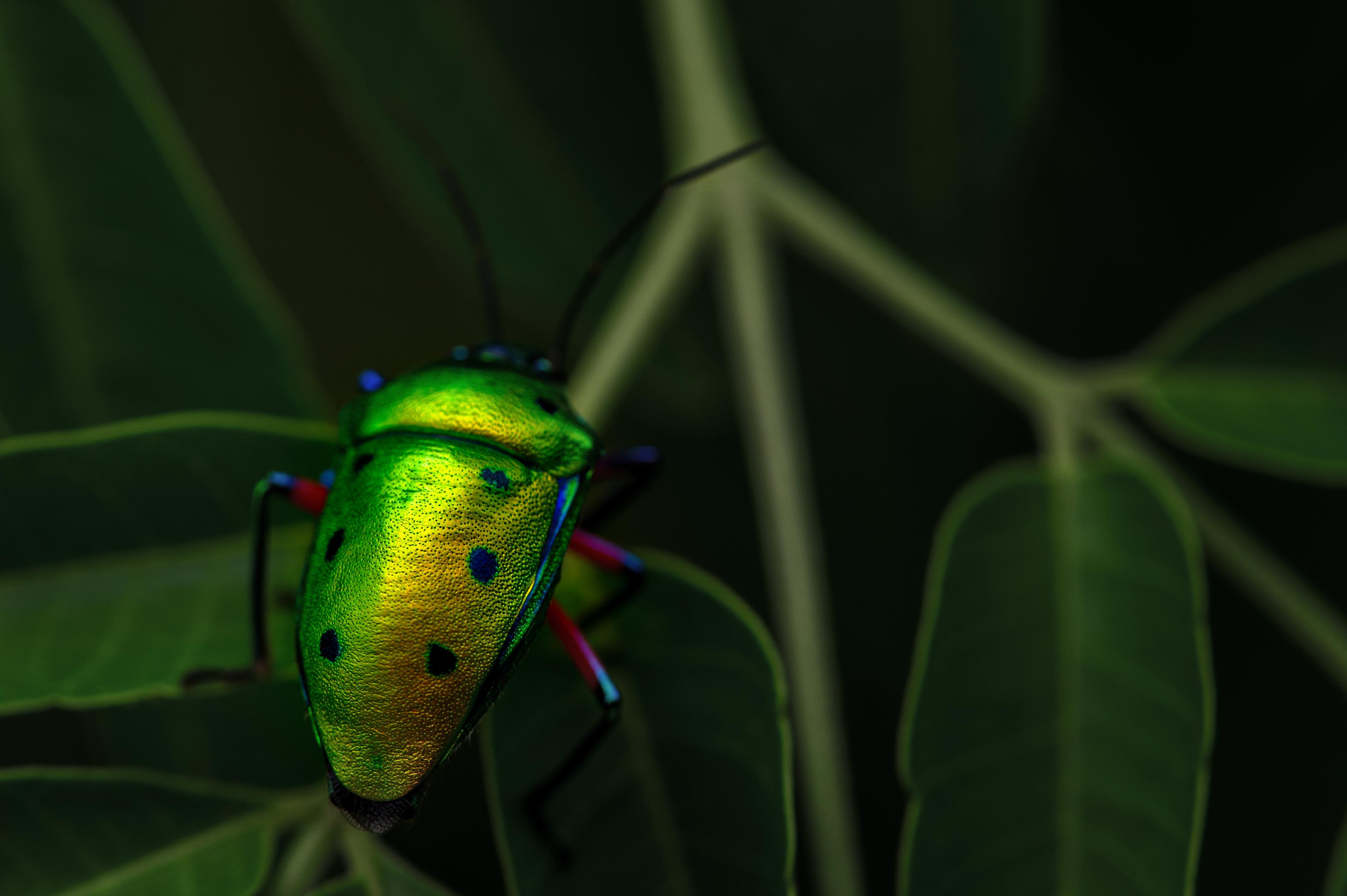 ナナホシキンカメムシの写真