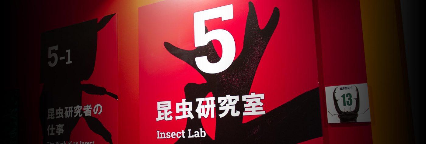 特別展昆虫 初日 昆虫研究室