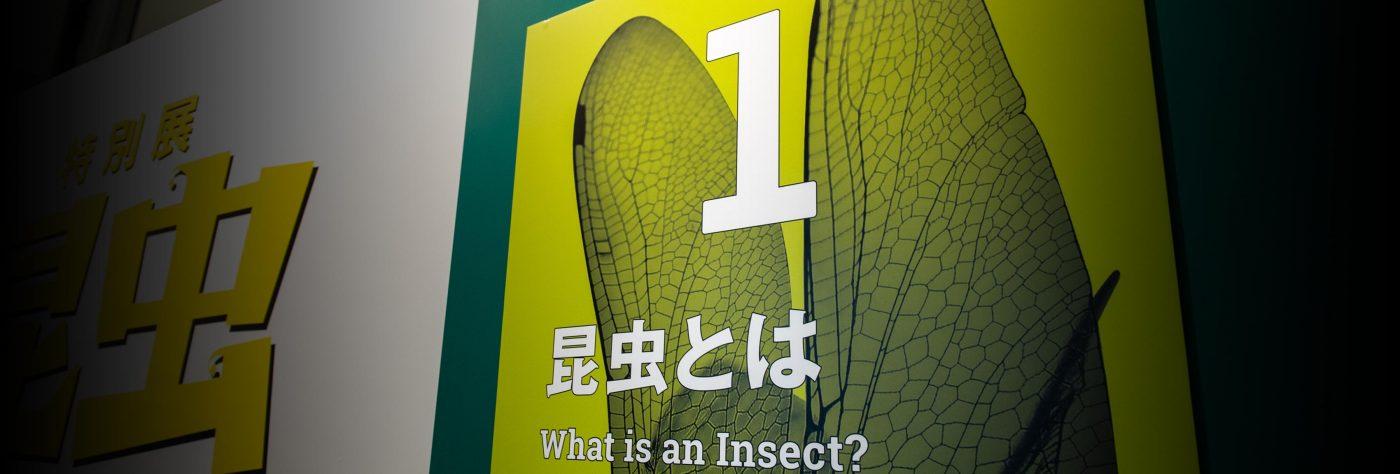 特別展昆虫 初日 昆虫とは