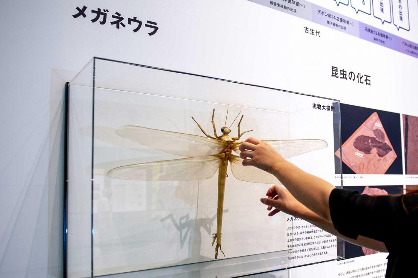 特別展昆虫 初日 メガネウラ実物大模型