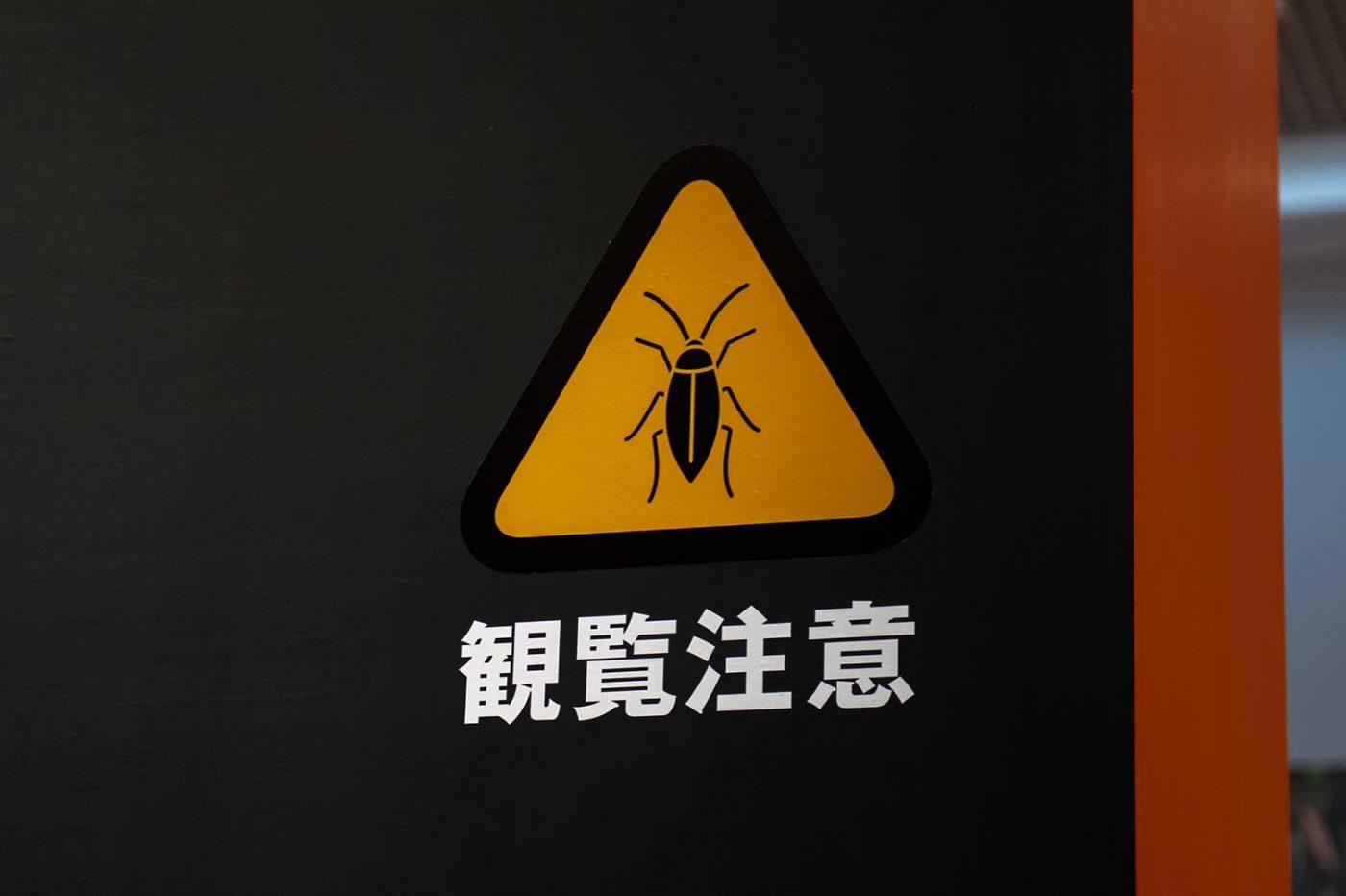 特別展昆虫 初日