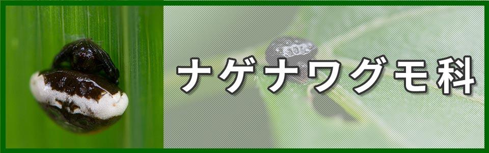 ナゲナワグモ科のバナー