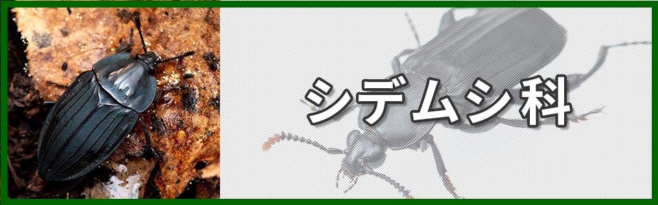 シデムシ科バナー画像