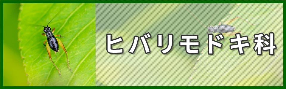 ヒバリモドキ科のバナー