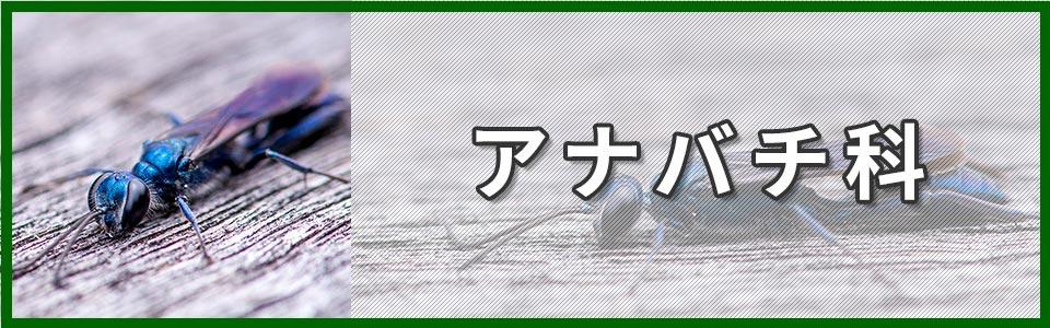 アナバチ科のバナー