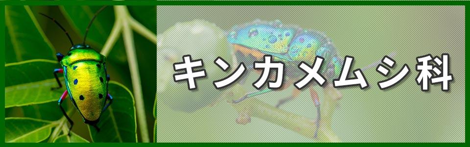 キンカメムシ科のバナー