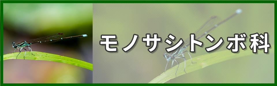 モノサシトンボ科のバナー
