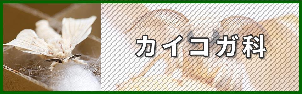 カイコガ科のバナー