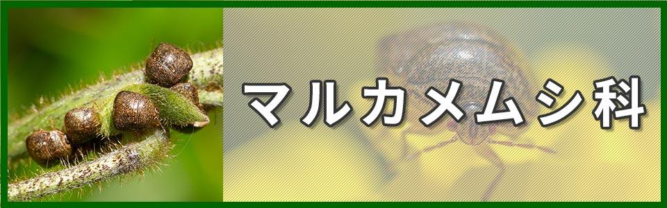 マルカメムシ科のバナー