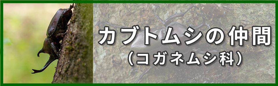 カブトムシの仲間のバナー