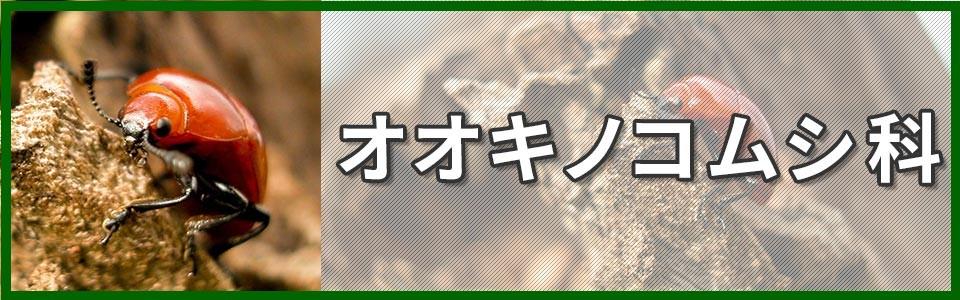 オオキノコムシ科バナー画像