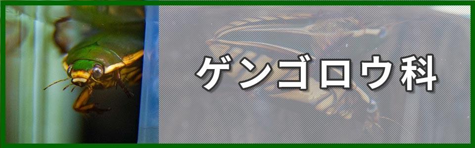 ゲンゴロウ科バナーの画像