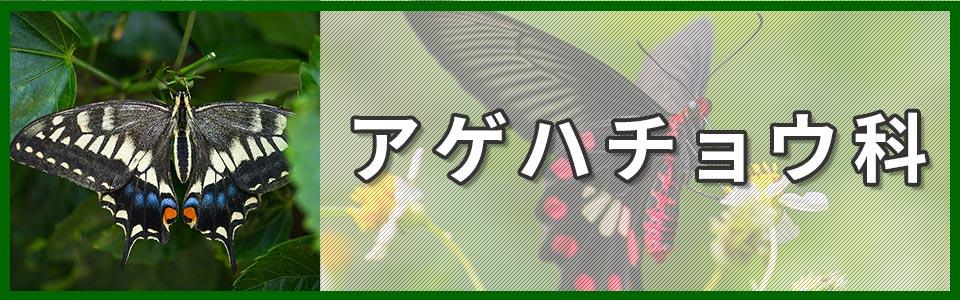 アゲハチョウ科のバナー
