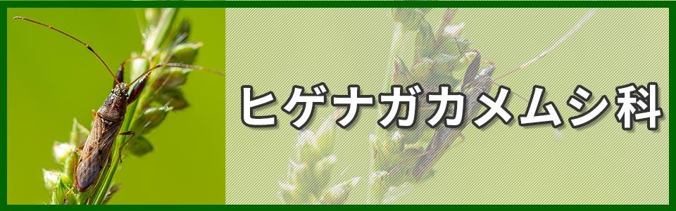 ヒゲナガカメムシ科のバナー