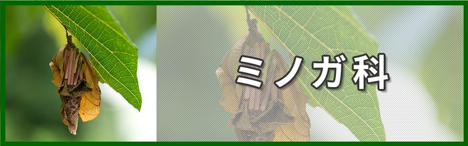 ミノガ科のバナー