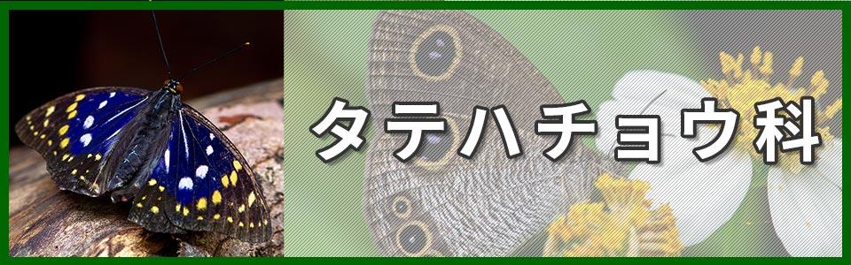 タテハチョウ科のバナー
