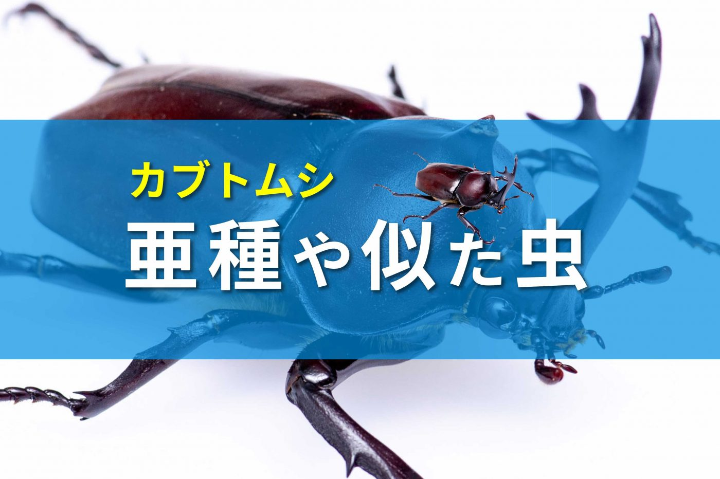カブトムシ亜種のバナー