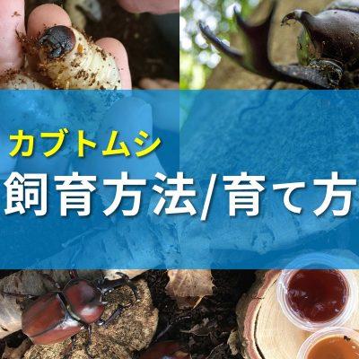 カブトムシの飼育バナー