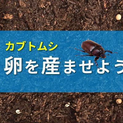 カブトムシ産卵のバナー