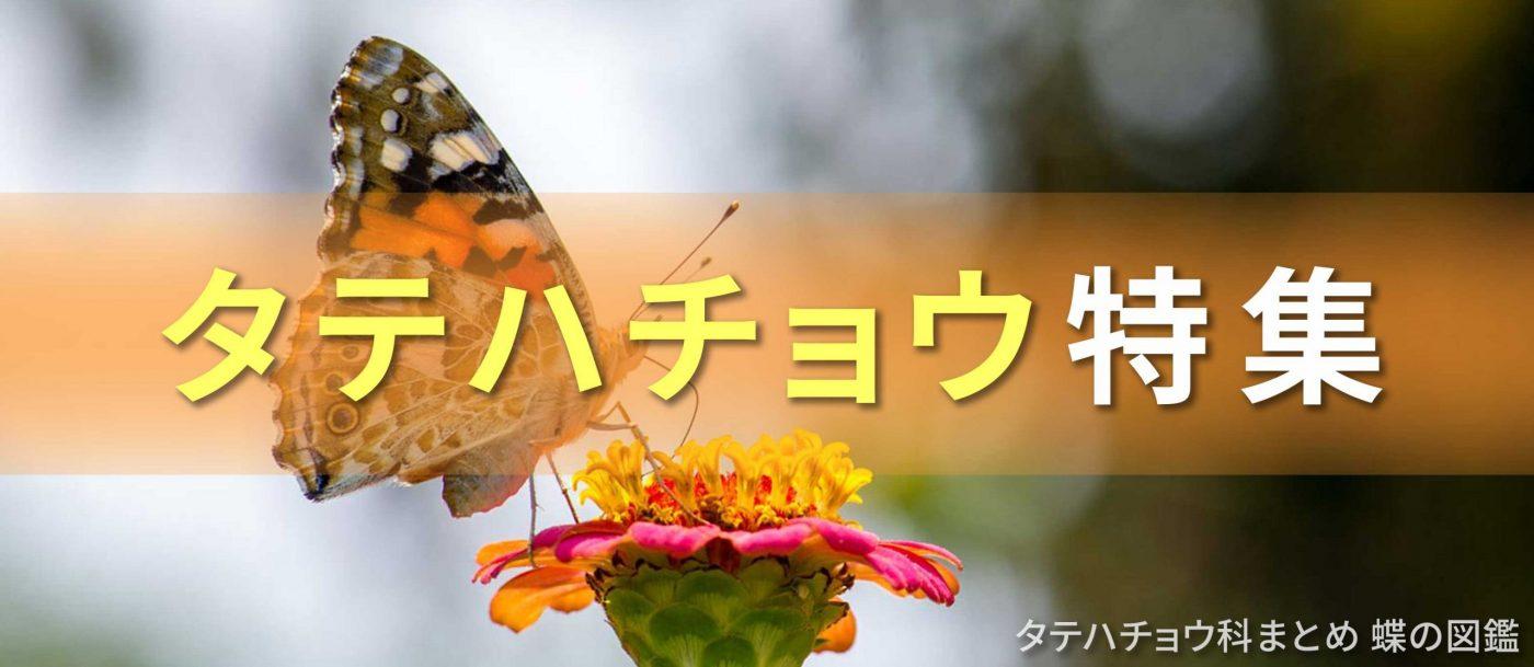 タテハチョウ特集バナー画像