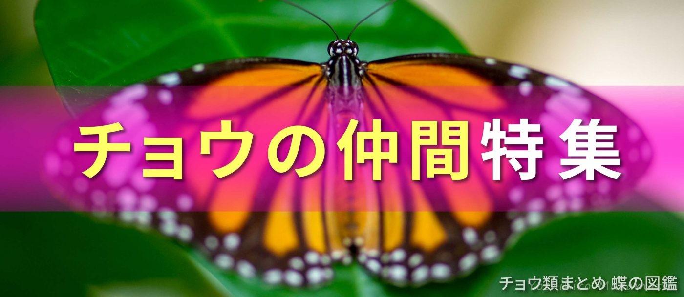 チョウの仲間特集バナー画像