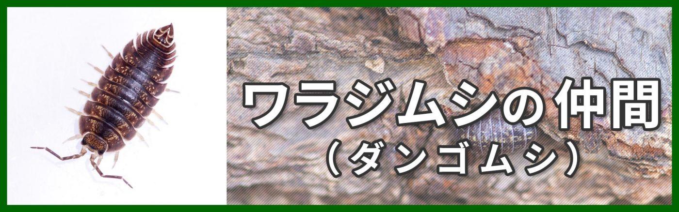 ワラジムシ、ダンゴムシの仲間