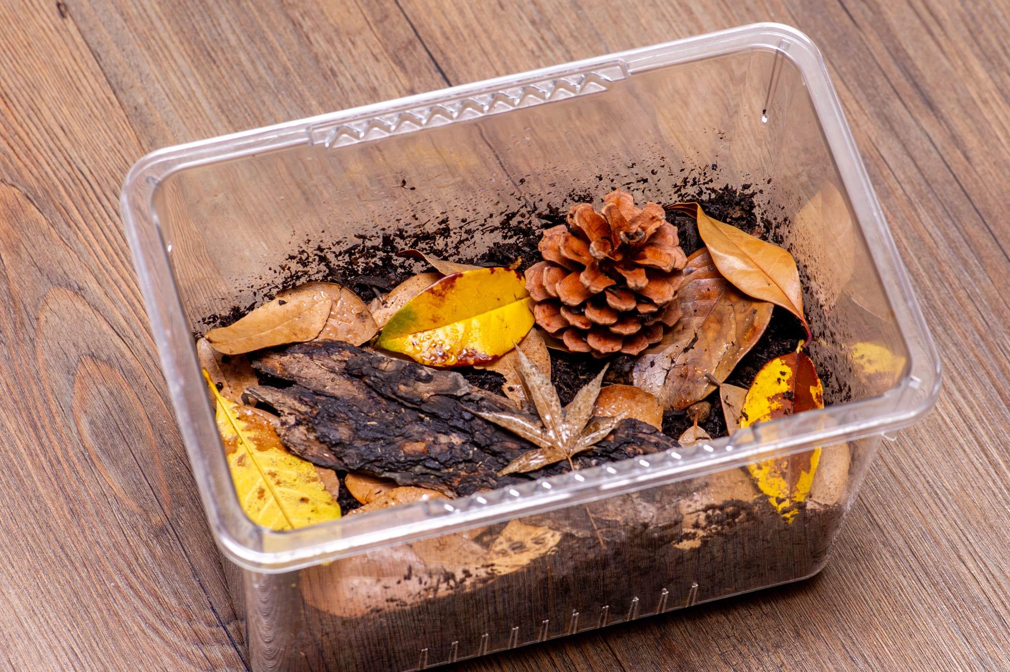 ダンゴムシの飼育ケースに落ち葉を詰めた画像