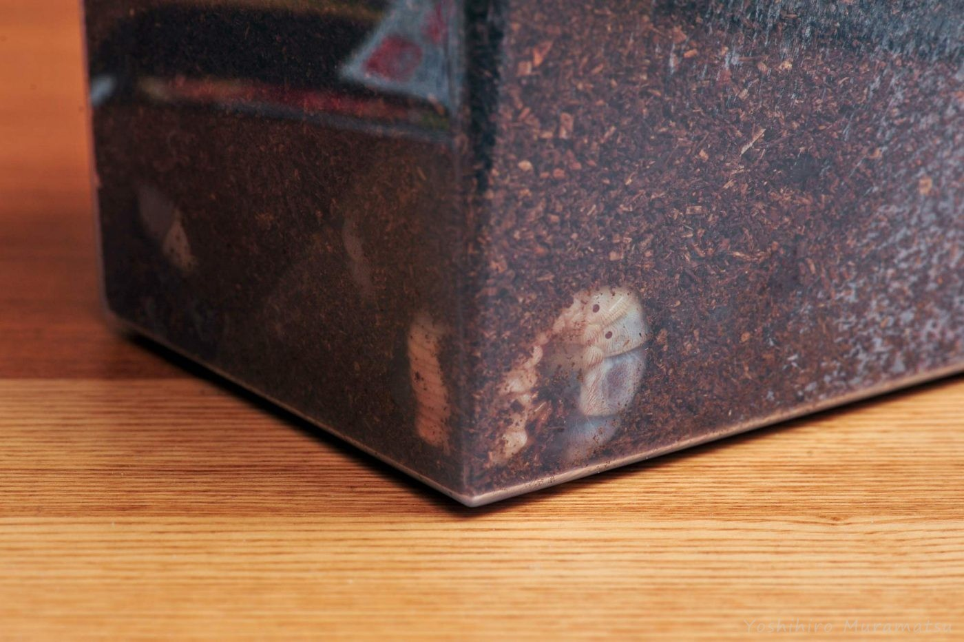 カブトムシの飼育ケースと幼虫の写真