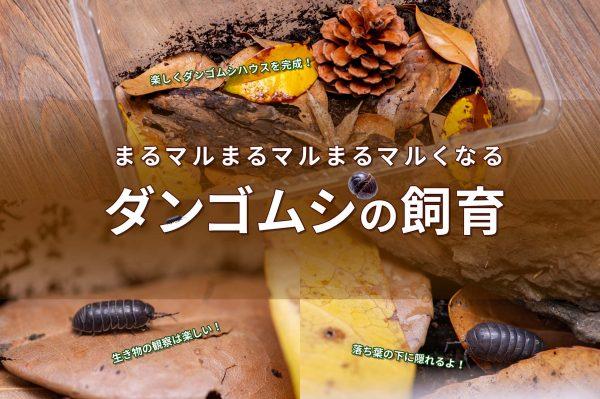 ダンゴムシ飼育のバナー