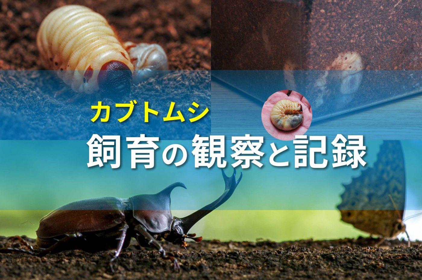 カブトムシ飼育記録のバナー