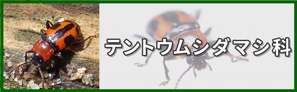 テントウムシダマシ科バナー画像