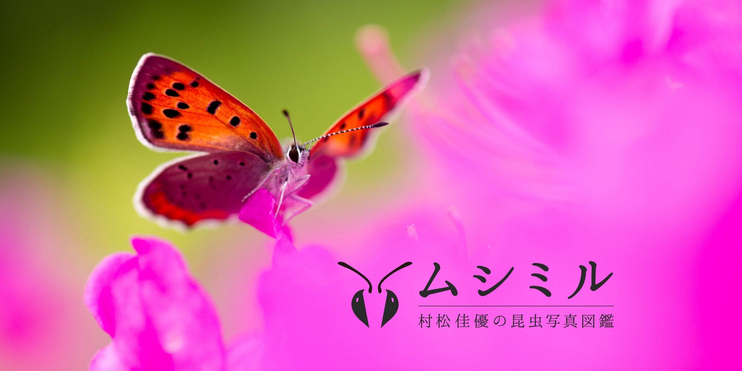 サイトOGP画像