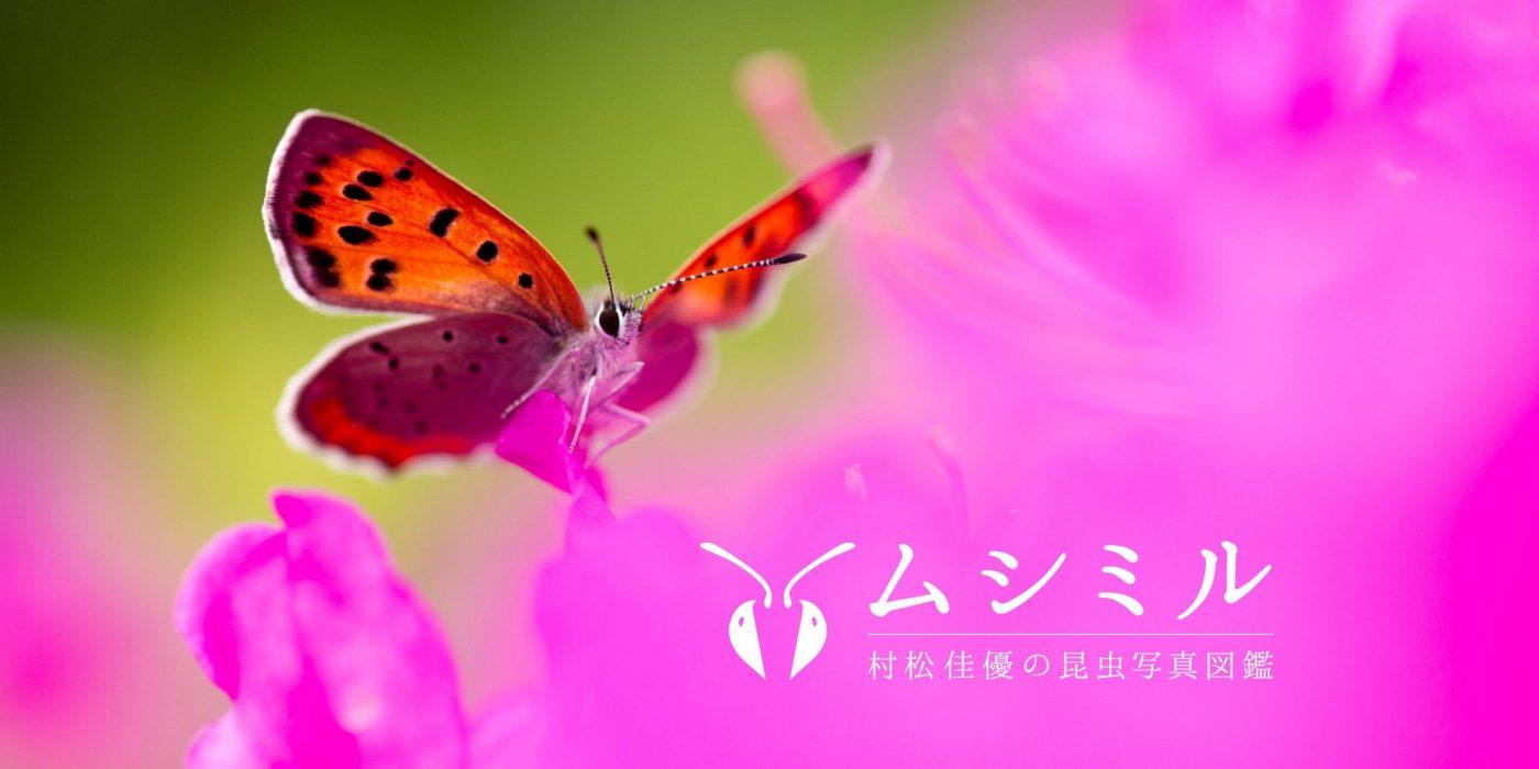 サイトOGP2画像