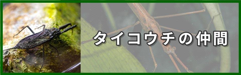 タイコウチ科バナー画像