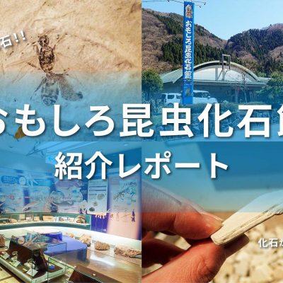 おもしろ昆虫化石館アイキャッチ画像