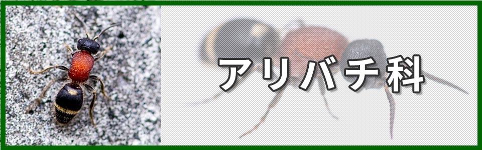 アリバチ科バナー画像