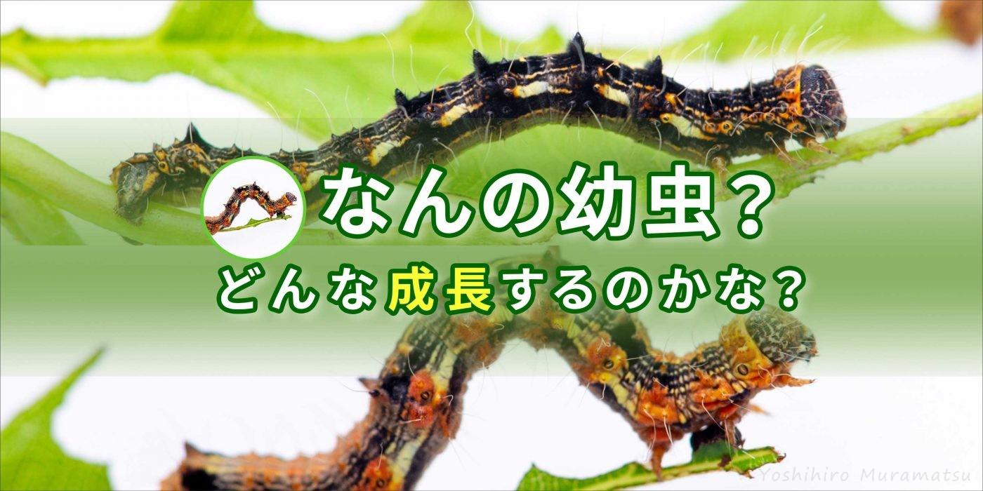 イモムシの飼育のバナー