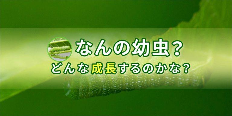 イモムシの飼育のバナー画像