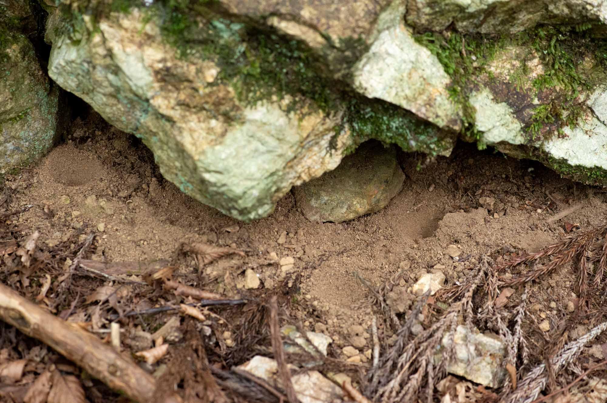 ウスバカゲロウの写真