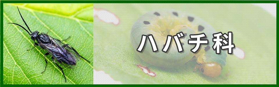 ハバチ科バナーの画像