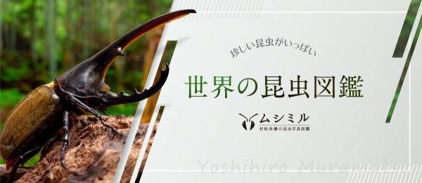 世界の昆虫図鑑バナー画像