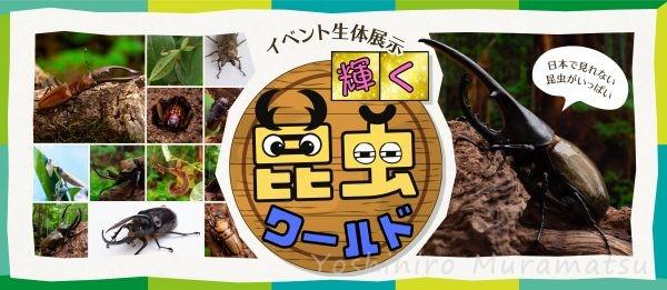 輝く昆虫ワールド特集バナー画像