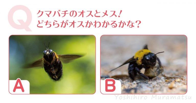 ハチのクイズのバナー