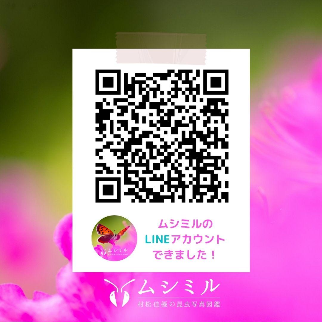 Instagram用LINE登録画像