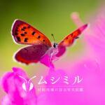 ムシミル【公式】Webの昆虫写真図鑑